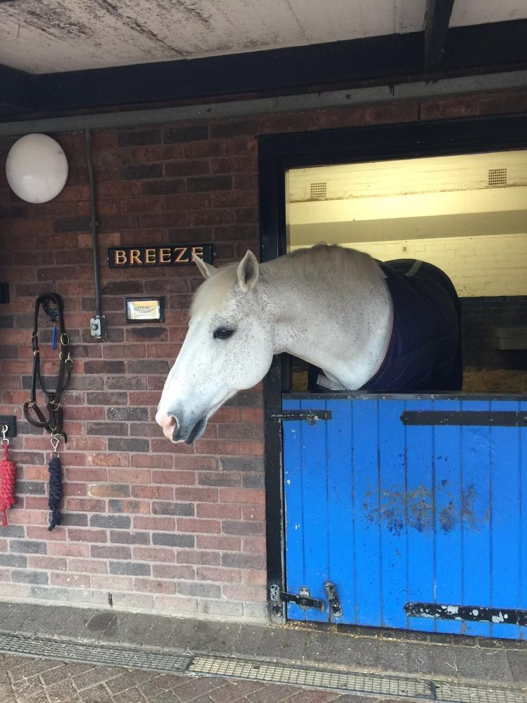 Breeze in his stables